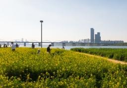 Korea Travels: My Solo Trip ㅡ Seoraeseom and Sangdong Lake Park