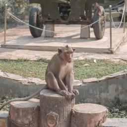 Vietnam Travels: Monkey Island + We Found the Best Banh Mi!